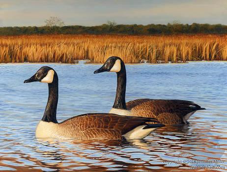 Blackwater Geese