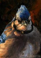 Evening Light Blue Jay