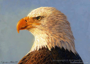 Evening Sun - Bald Eagle by Nambroth