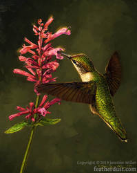 Fine Dining  - Ruby-Throated Hummingbird by Nambroth