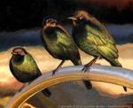 Turbulence - Brewer's Blackbirds