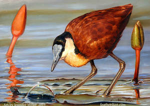 The Bubble - African Jacana