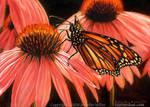 Luminous Temple - Monarch Butterfly