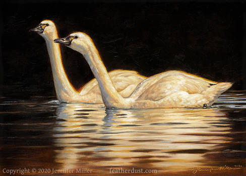 Two Lights on a Dark Water - Tundra Swans