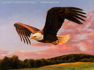 A Good Evening - Bald Eagle