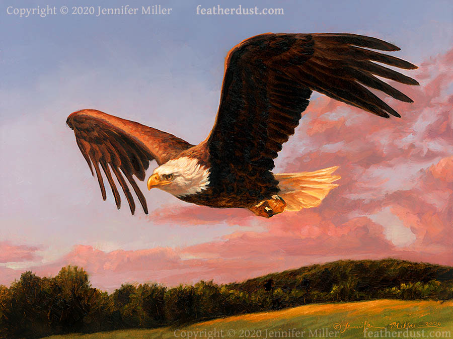 A Good Evening - Bald Eagle by Nambroth