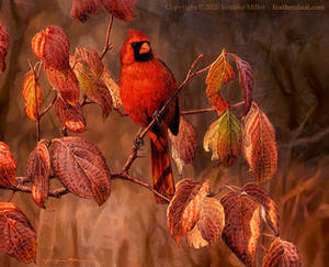 Northern Cardinal in Dogwood