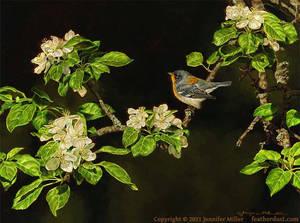 Spring Beacons - Northern Parula