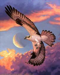 Crescent: Osprey
