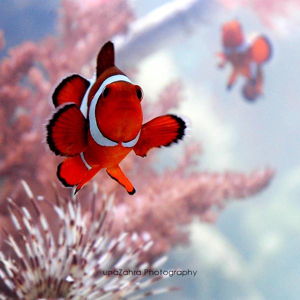 Oh, Nemo!