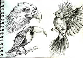 Pencil time: Birds