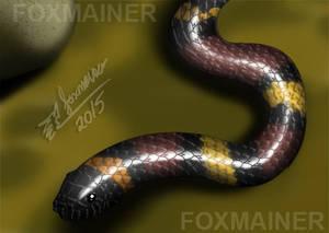 1428563483.foxmainer Coralillo