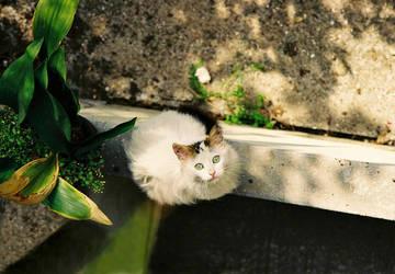 A Street Cat by rezzanakin