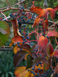 Colours of Autumn by rezzanakin