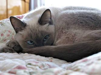 My Cat by rezzanakin