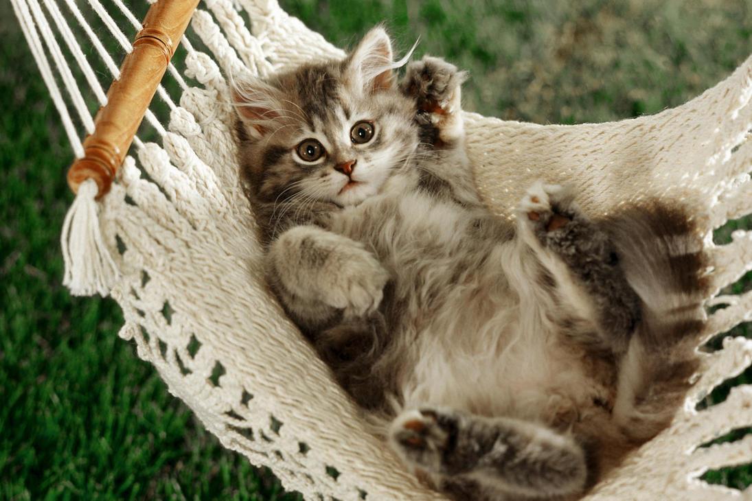adorable_cat_by_kissofdead06-d4glgtd.jpg