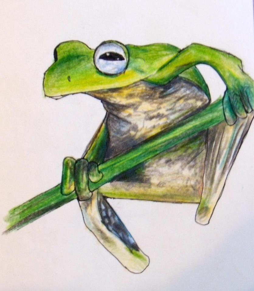 Tree Frog - Colored Pencil by lemur-llama on DeviantArt