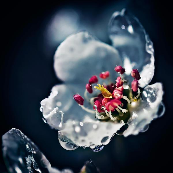 Grace by ArtOfFragility