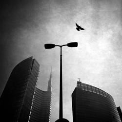 Fly Away by valentina85