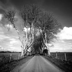 Treesroad by valentina85