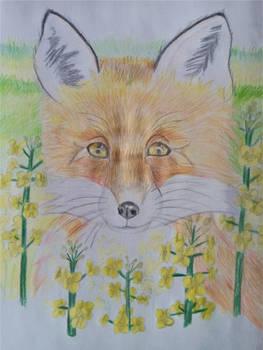 (Gift) Fox