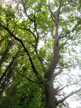 (Gift) Tree Tales