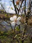 (Gift) River Blossom