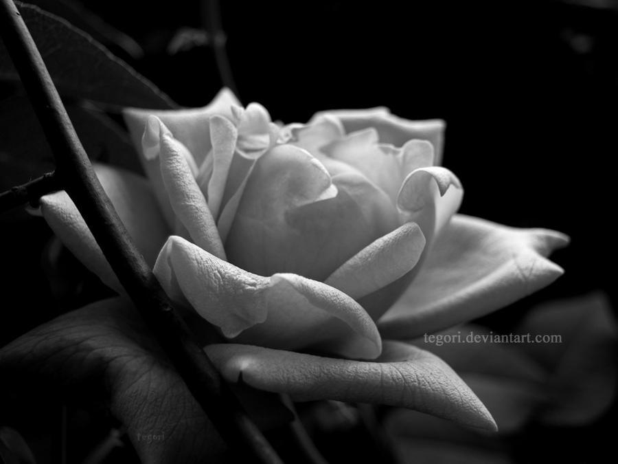 una rosa en la oscuridad by Tegori