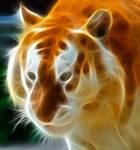 Fracted Golden Tabby Tiger 2