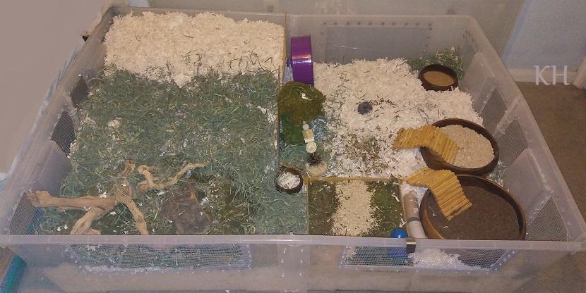 Quadruple samla bin cage tips how to and diy hamster for Hamster bin cage tutorial