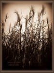 Forest of Reeds by MagicBlanche