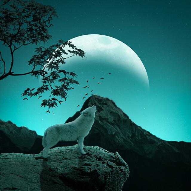 Photo Manipulation (The Wolf)