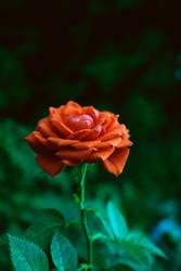 [I] The Flower of War by Timothi-Ellim