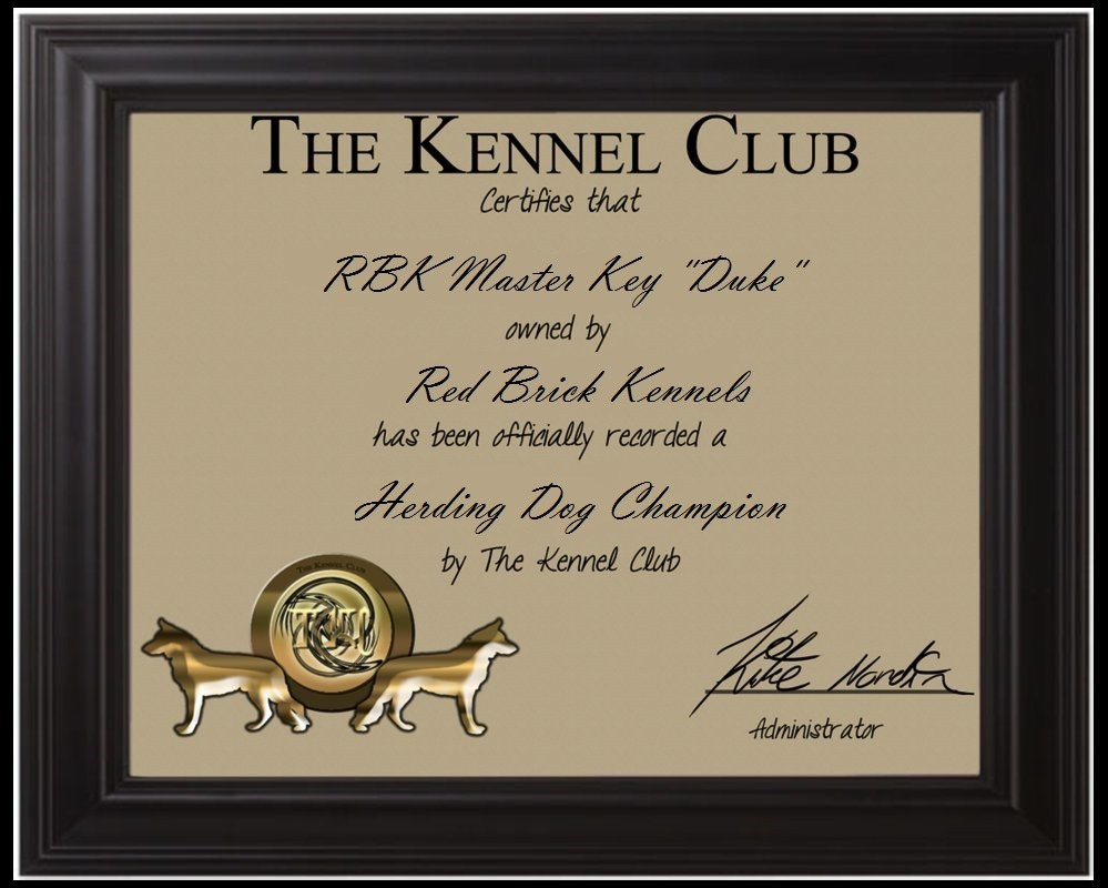 Duke herding dog champion certificate by redbrickkennels on deviantart duke herding dog champion certificate by redbrickkennels yelopaper Images