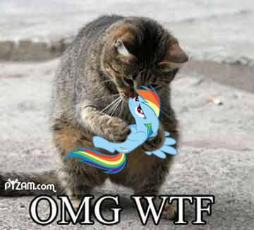 OMG WTF Cat and Rainbow Dash by Boofette