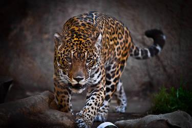Jaguar by LifeCapturedPhoto
