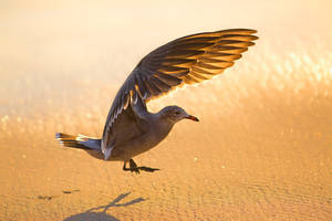 Seagull by LifeCapturedPhoto