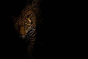 Jaguar Low Key by LifeCapturedPhoto