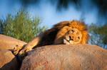 King by LifeCapturedPhoto
