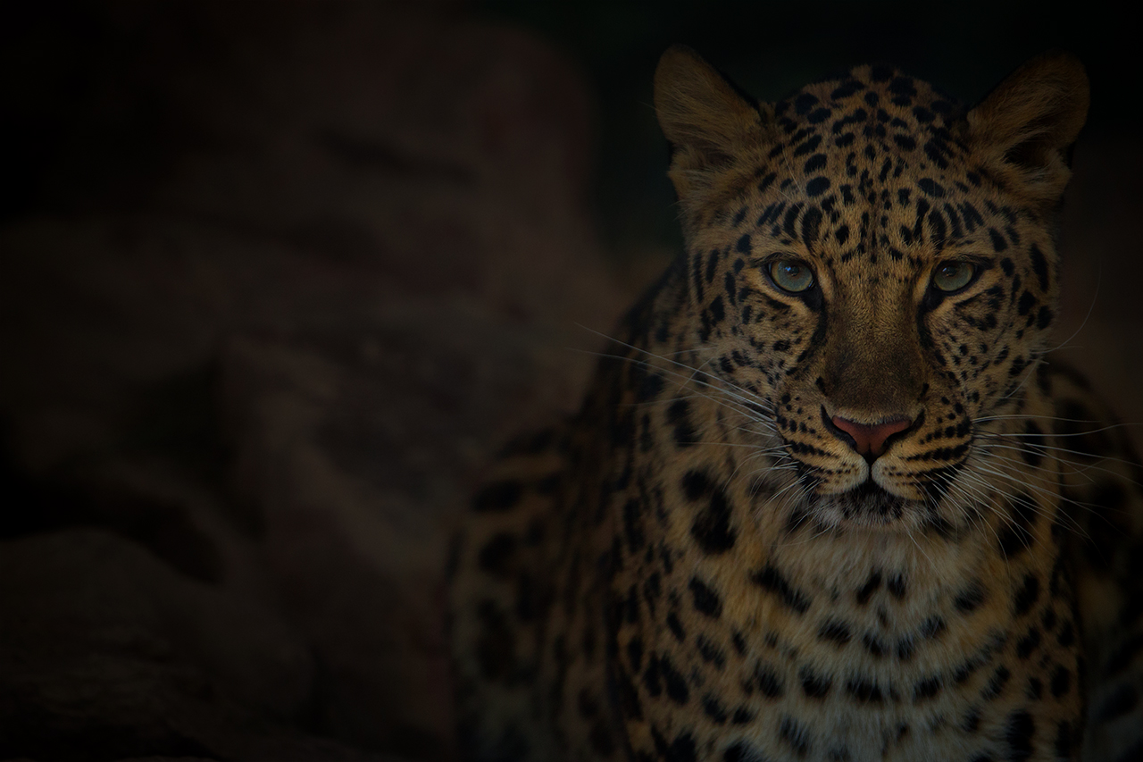 Leopard by LifeCapturedPhoto