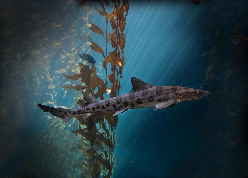 Shark by LifeCapturedPhoto