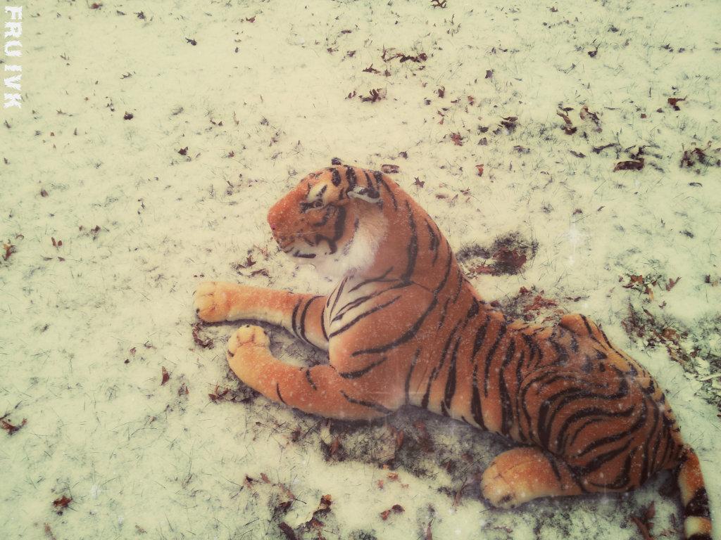 Hipster Tiger by FlyingRobotUnicorns on DeviantArt