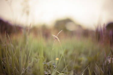 Herbes by SHA-1