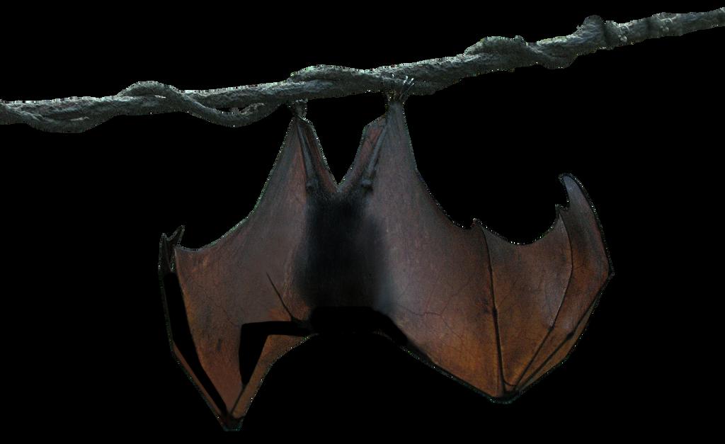Hanging Bat by TheStockWarehouse