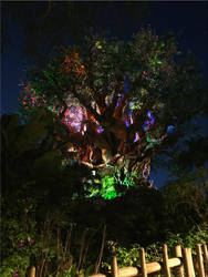 The Tree of Life Night Reflections
