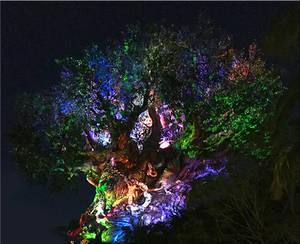 Tree of Life Coming Alive IMG 5205