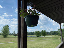 A Hanging Porch Flower Pot IMG 0220