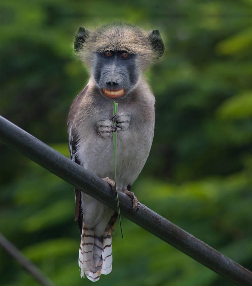 Monkeybird by mceric