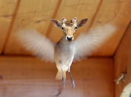 Young Flying Deer by mceric