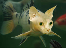 Catfish by mceric